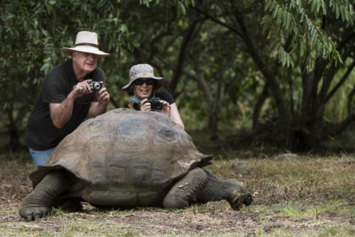 Model with Galapagos Giant Tortoise